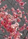 floraison.jpg