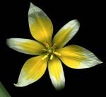 fleurs_239.jpg