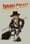 indiana-canard.jpg